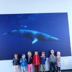 wycieczka-przedszkola-do-oceanarium